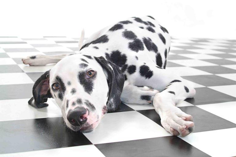 הכלבלב החמוד שהופיע בסרט הוא אכן כלב, על כל המשתמע מכך
