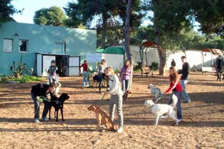מתנדבים מאוסטרליה ומארגנטינה