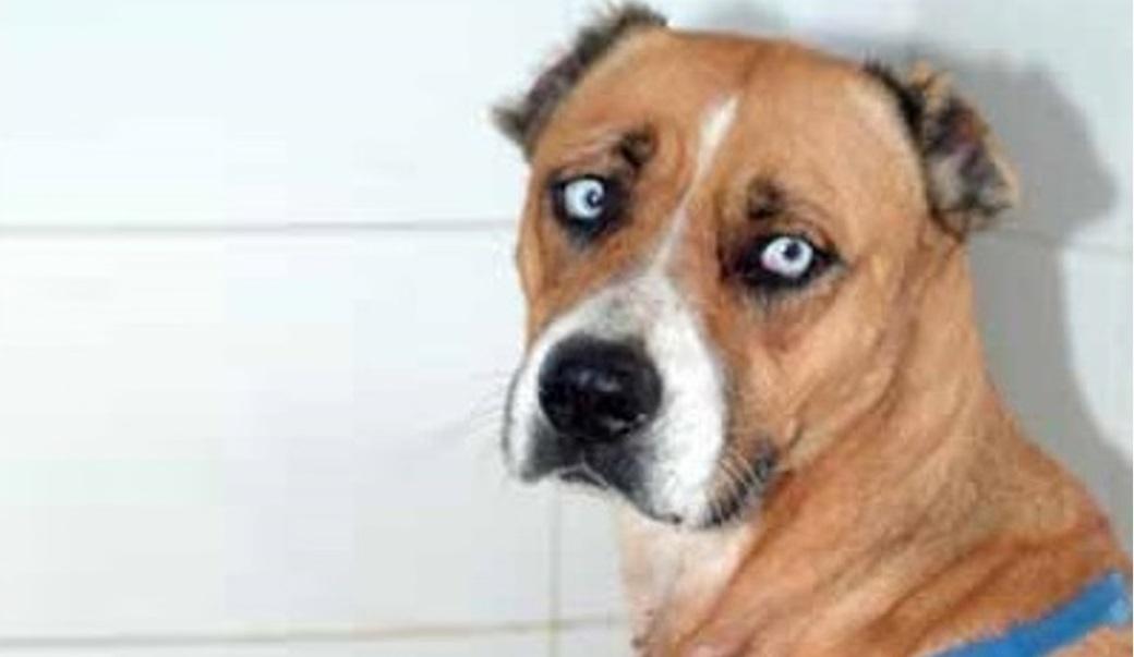 מקרה התעללות מזעזע בכלבה