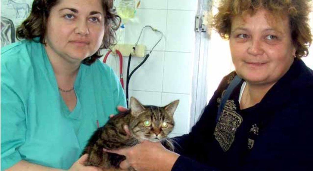 החתולה ניצלה בעקבות ניתוח שנערך במרפאת האגודה