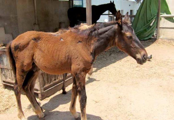 ג'סטין כיום – סוס חזק ושובב