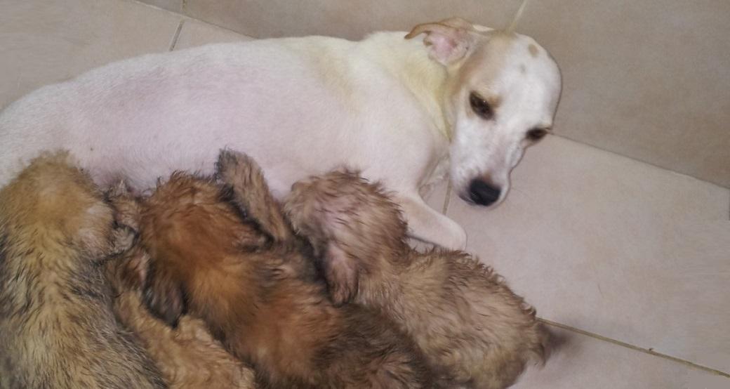 דייזי מטפלת בגורים הצעירים