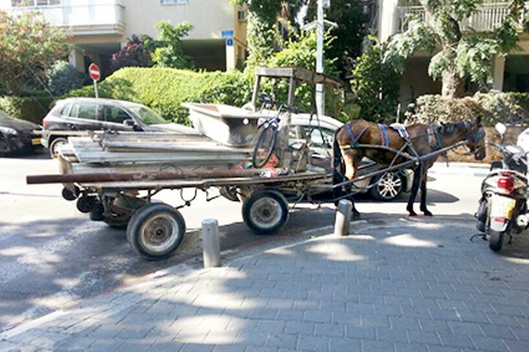 מרדף בן חמש שעות אחרי הסוס ברחבי תל אביב