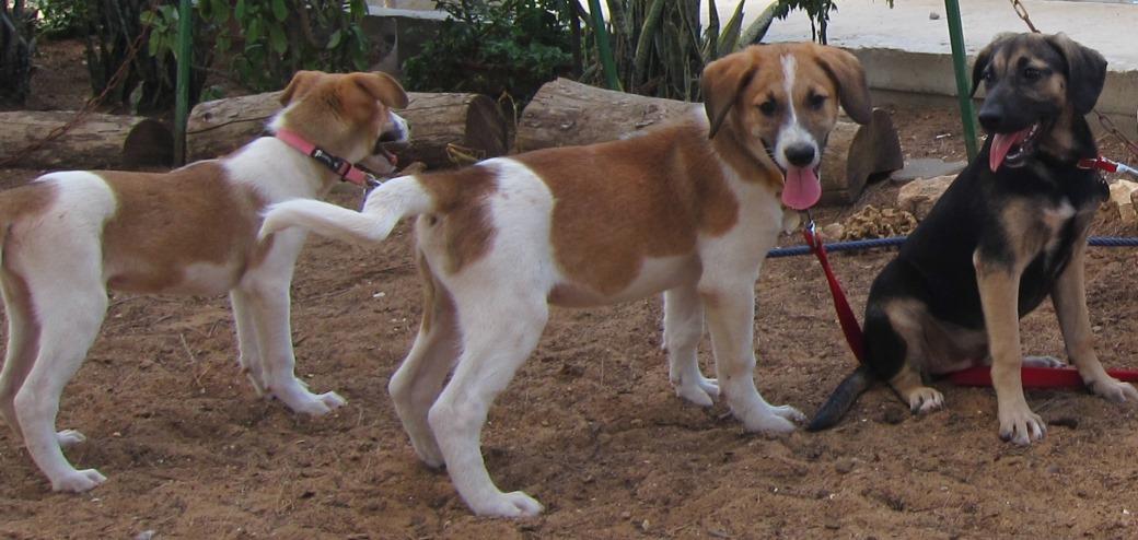 תשעה כלבים נטושים הוטסו מאילת לאגודה