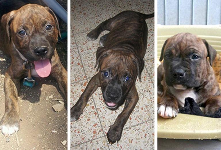 Справа: Зиппо в возрасте одного месяца, полутора месяцев и двух с половиной месяцев