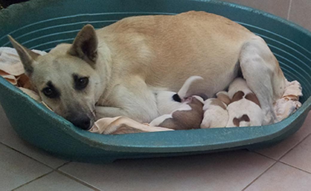מקלט מוגן - הכלבה מניקה את הגורים באגודה