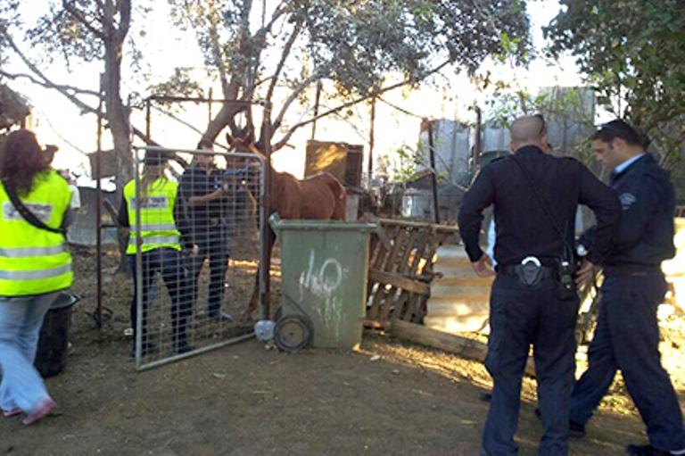 צוות המשטרה מסייע בחילוץ בעלי החיים