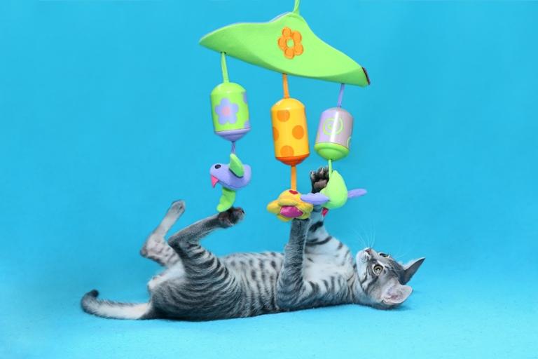 שיימס - גור חתולים בצבע אפור מנומר בן שלושה חודשים, סקרן ושובב. הוא פעלתן, אנרגטי ומאוד אוהב משחקים וצעצועים. מחכה כבר בקוצר רוח להתחיל את החיים ולחוות דברים חדשים.