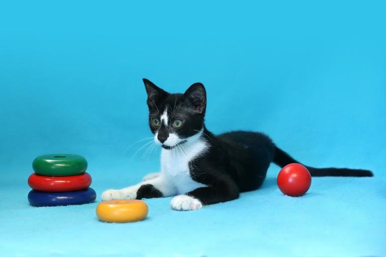 פליקס - חתול מעורב בצבע שחור-לבן בן שלושה חודשים, מתמסר ובעל אופי נוח. מחפש פרטנר רציני שעמו יוכל לבנות קשר מחייב ורציני ולחיות חיים מלאים ברגעים שמחים וצבעוניים.