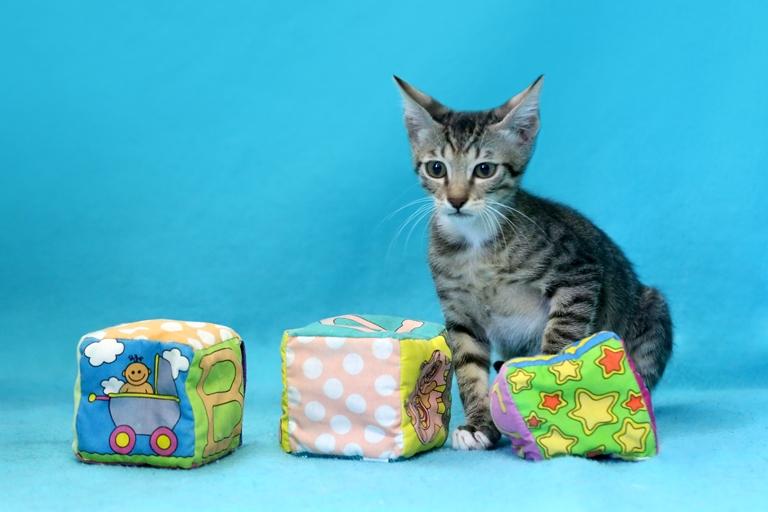 אוסקר - גור שובב בן שלושה חודשים, עצמאי אך קשוב. הוא אוהב להשתולל ולשחק ואז לתפוס תנומה כמו תינוק. ישמח למצוא מישהו שיזרוק עבורו את הקוביות וישנה לו את המזל.