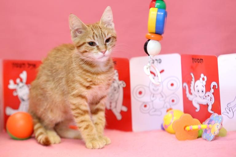 ג'ינג'ר - גורת חתולים טובת לב ובעלת אופי רגוע ונינוח, שאוהבת ללמוד ומחכה כבר לצבור ניסיון בבית הספר של החיים. היא מתלטפת, אוהבת מגע ומקווה למצוא אהבה רצינית ומחייבת.