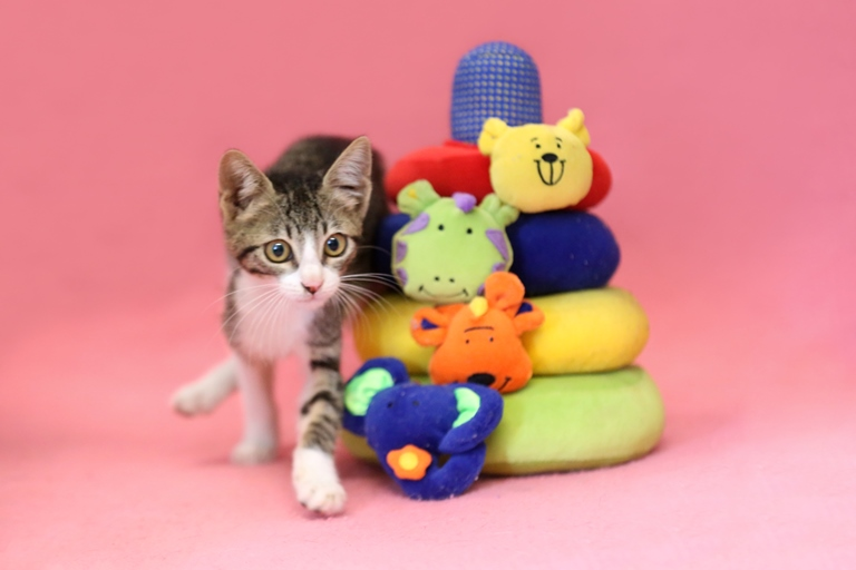 מונה - גורה שובבה ואנרגטית בת שלושה חודשים, סקרנית ואוהבת גירויים. היא חברותית, מסתדרת היטב עם חתולים אחרים ומחפשת מישהו עם אנרגיות דומות.