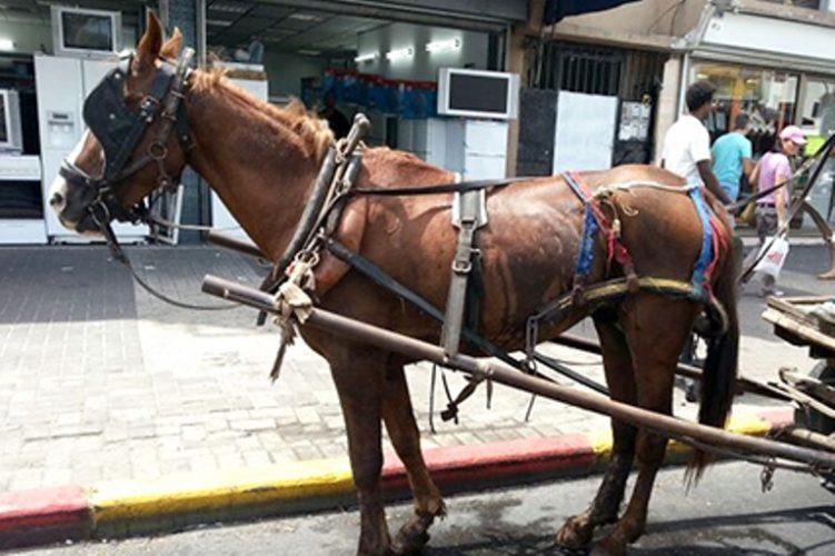 Forced labor - Mogli harnessed to a wagon