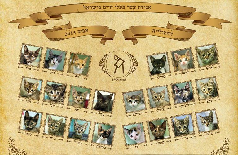 גורי חתולים - תמונת מחזור אביב 2015