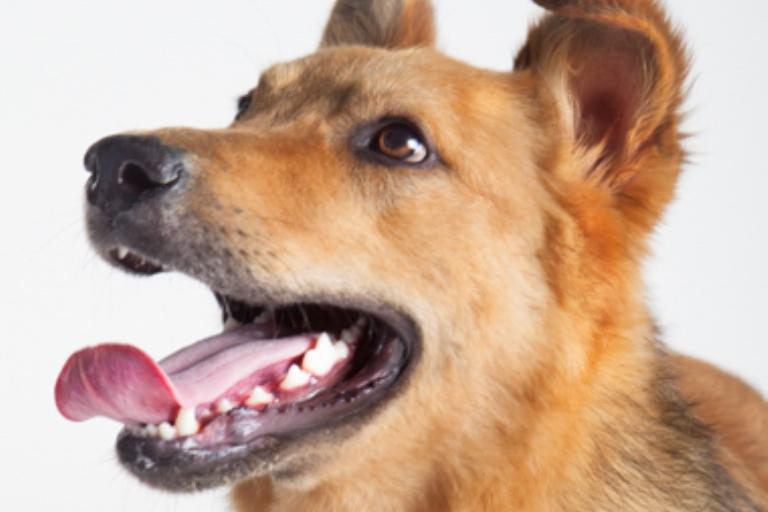 אושר - כלב מעורב ופרוותי בצבע חום בן 9 חודשים, אנרגטי ושובב. כלב קופצני וצעיר שכל דבר מעניין אותו והוא כבר מחכה לרגע שבו הוא יוכל להרגיש את המרחבים הפתוחים בטיולים ארוכים ביחד עם בעלים אוהבים