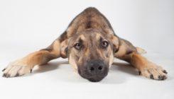 Buki - 1 year-old adorable male dog
