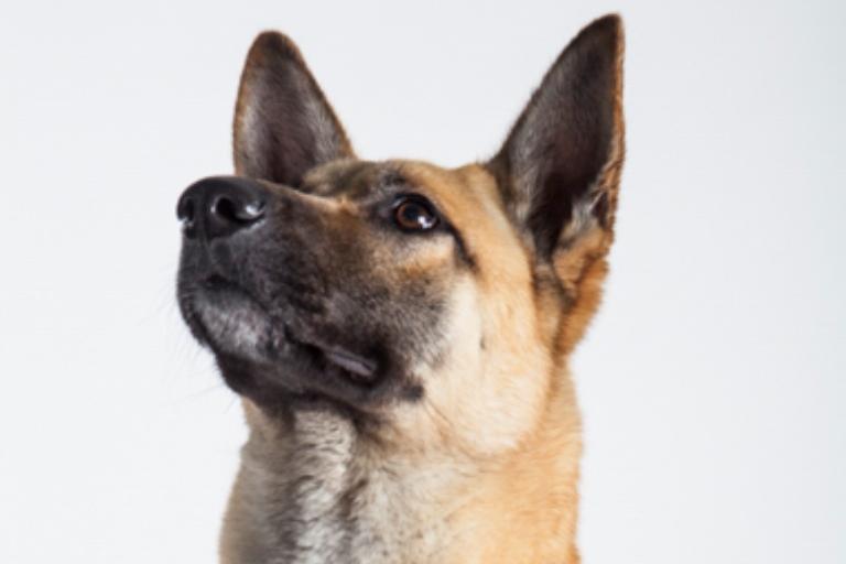 גבר - כלב מלינואה מעורב בצבע בז' עם אף שחור בן שנה, גדול ומרשים. כלב דומיננטי עם פאסון שיודע מה הוא רוצה מחפש בעלים אסרטיביים שיודעים לחנך ולהחזיק קצר. הוא זקוק להרבה פעילות ולמשמעת