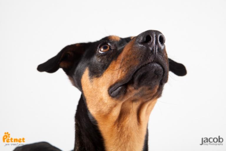 דובי - כלב דוברמן מעורב בצבע שחור-חום בן 8 חודשים, מלא רוח שטות ושובבות. כלב מתוק, מעט קשוח עם כלבים אחרים, אך כשהוא מתחיל לשחק הוא שוכח מהכל ופשוט מתמסר. מחפש משפחה אוהבת שתיתן לו בית חם לכל החיים