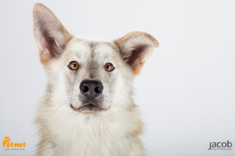 זאביק - כלב האסקי סיבירי מעורב בצבע אפור-שחור בן 9 חודשים, חתיך ויפיוף. כלב מרשים בעל פרווה נעימה לליטוף שפשוט קשה לעמוד בפניו. מחפש מישהו שמבין בגזע ושיודע שהוא לא אוהב להישאר לבד