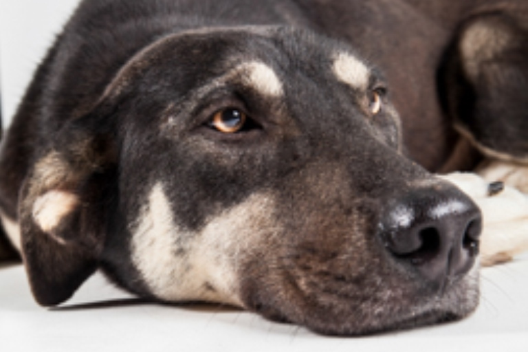 מוקי - כלב רועים מעורב בצבע חום-שחור בן שנתיים, עדין ומופנם. כלב טוב ובוגר עם שקט פנימי שמשרה אווירה טובה ויכניס המון אושר ואהבה לכל משפחה שתבחר לאמץ אותו