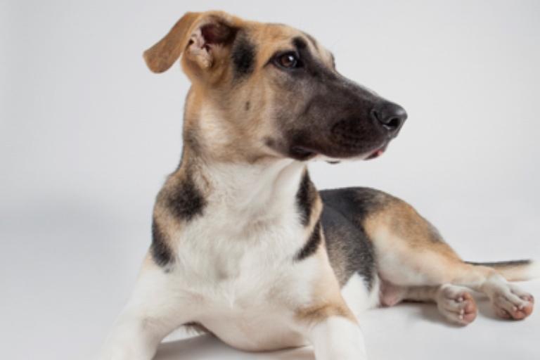 סטאר - כלב רועים מעורב בצבע שחור-אפור-לבן בן 7 חודשים, מתוק וביישן. גור חמוד שמחפש מישהו שייתן לו ביטחון וים של אהבה. הוא עדיין זקוק לחינוך ולמישהו שיוציא איתו הרבה אנרגיה