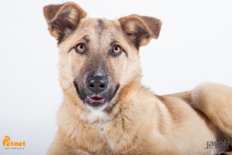 רוזה - כלבת רועים מעורבת בצבע חום בת 10 חודשים, חייכנית וביישנית. כלבה טובה עם נשמה ענקית שלא נחשפה לעולם עד עכשיו ולכן היא מעט מפחדת וזקוקה למישהו שיוכל לגלות איתה דברים חדשים ולצבור ביחד חוויות טובות