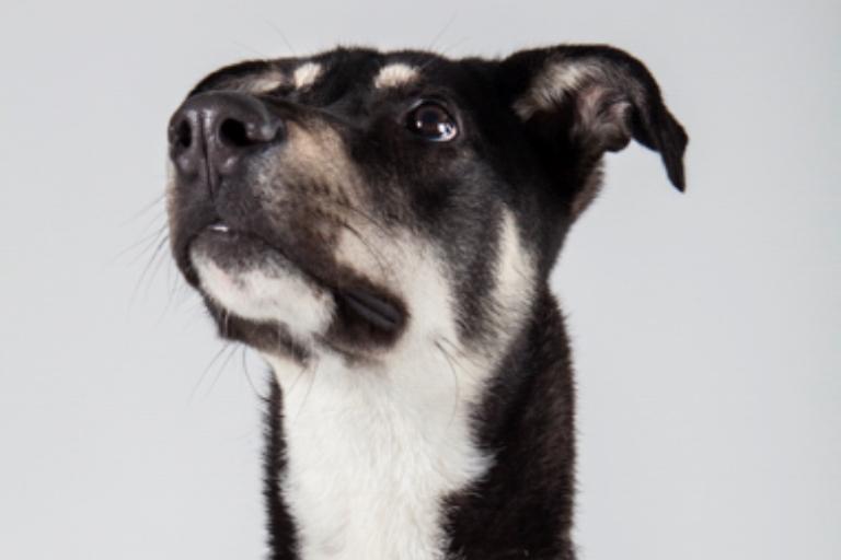 שושן - כלב רועים מעורב בצבע שחור-חום בן 10 חודשים, סקרן ושובב. כלב אנרגטי שאוהב לשחק ומאוד רוצה למצוא מישהו רציני ומחויב להמשך החיים. הוא עדיין זקוק לחינוך ולהוצאת אנרגיות בטיולים ארוכים