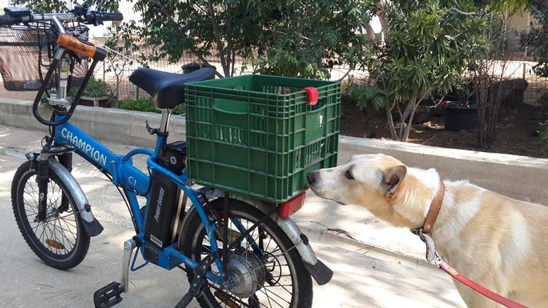 לונה - כנענית מעורבת בת שנה וחצי עושה היכרות ראשונה עם אופניים