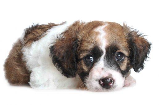 המדריך למציאת כלב אובד