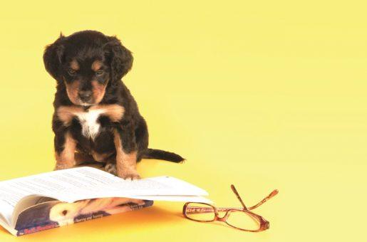 מאמרים על כלבים