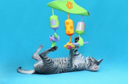 מדריך למאמצים חתול