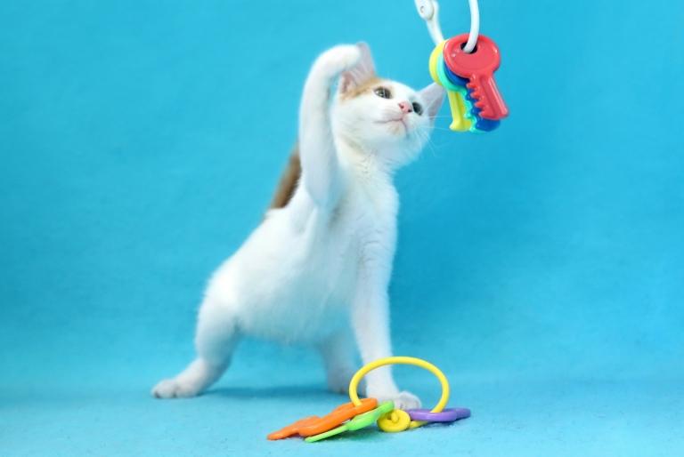 חתולים לאימוץ