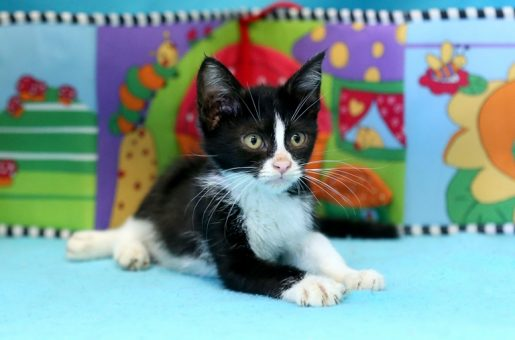 מאמרים על חתולים