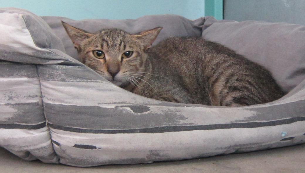 החתולה מתאוששת ונמצאת תחת השגחה וטרינרית