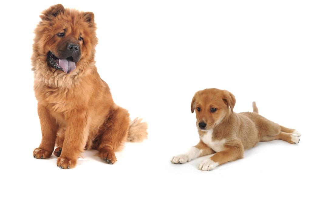 כלבים גדולים יכולים לחיות בדירות קטנות