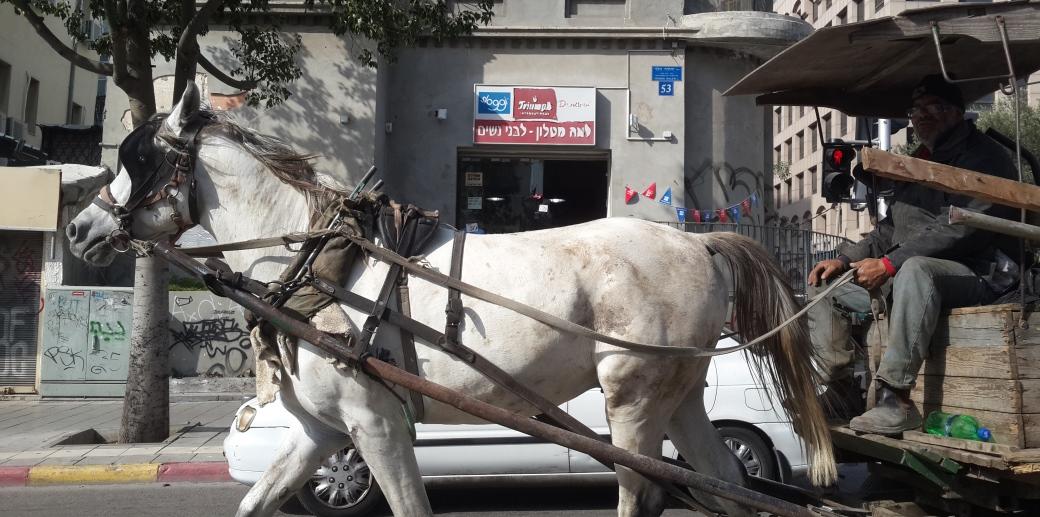 סוס סוחב עגלה