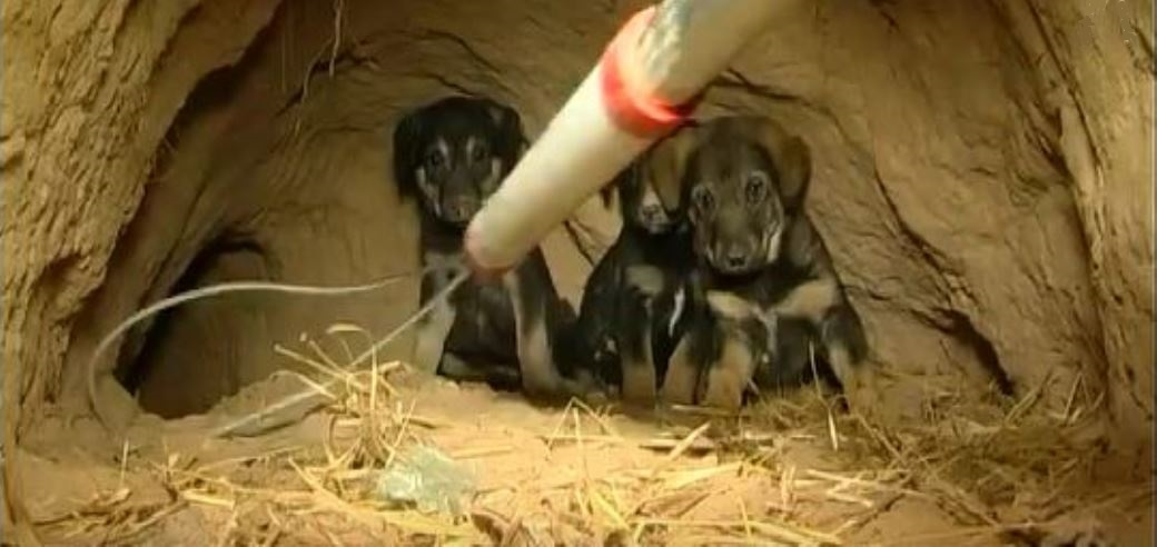 חילוץ גורי כלבים ממאורה