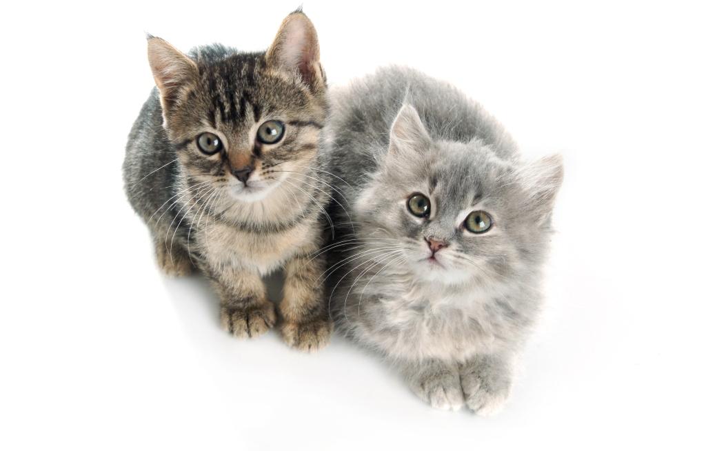 גורי חתולים שננטשו על ידי בעליהם לאחר ההמלטה ממתינים לבית חם