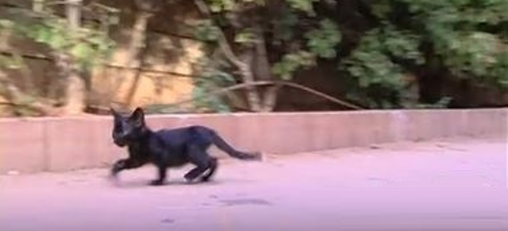 גורי חתולים בשכונת מגורים בראשון לציון