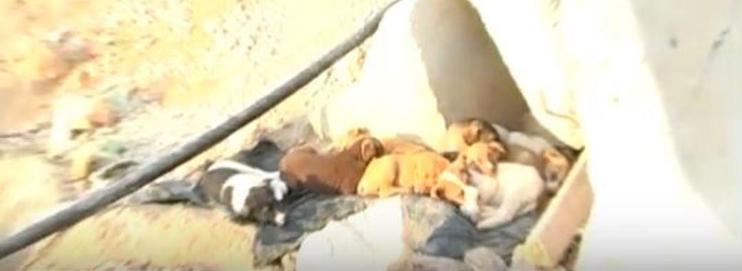 גורי כלבים נטושים במחצבה