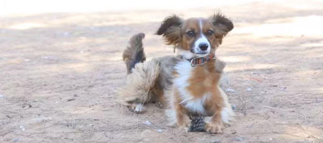 מייפל - כלבה חברותית, מחונכת ובעלת הרבה אנרגיות למשחקים וליטופים