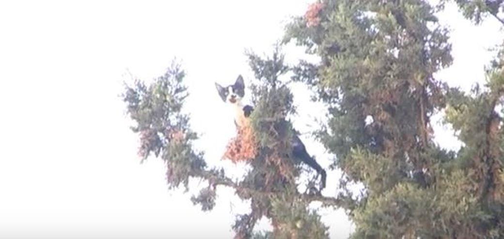 חילוץ חתול מצמרת עץ