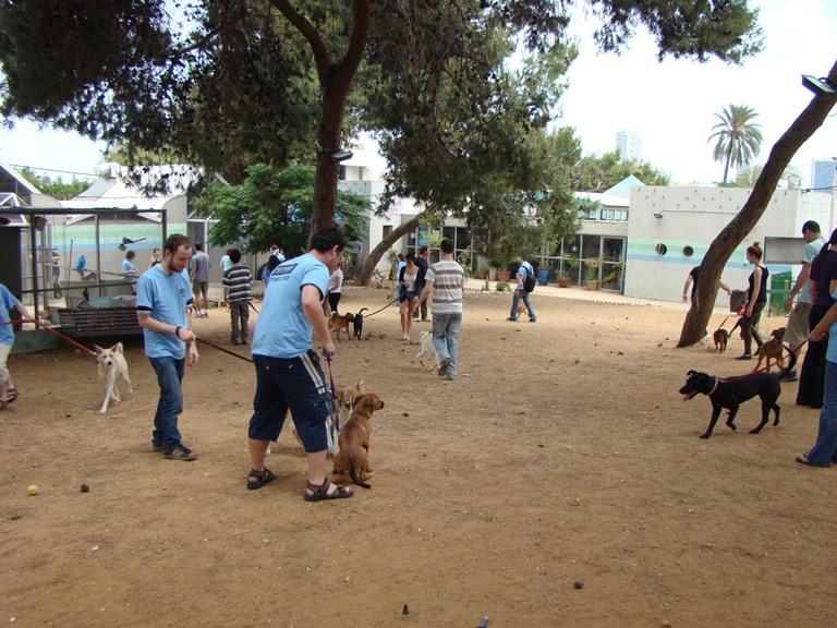 הסטודנטים הוציאו לטיול את הכלבים המועמדים לאימוץ