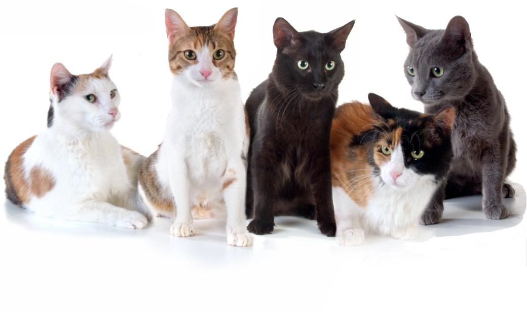 חתולים ממתינים לבית חם