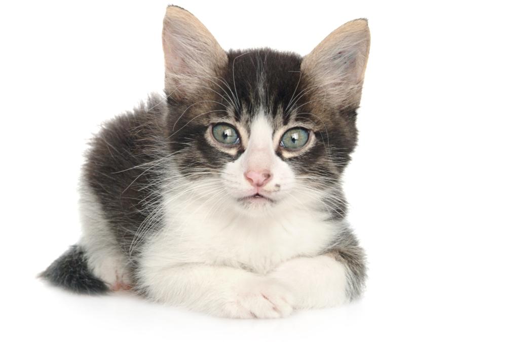 מעקרים ומסרסים חתולים חסרי בית
