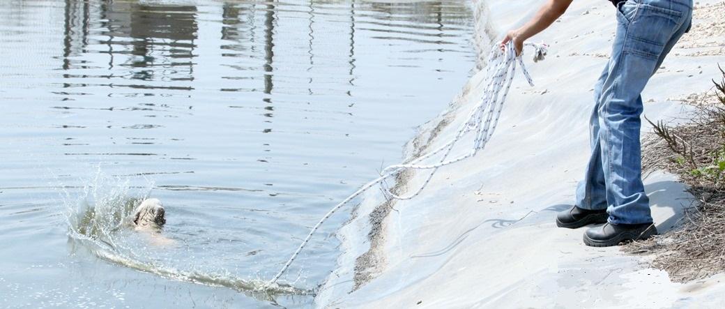 חילוץ מוצלח נוסף של כלבה מתוך מאגר מים