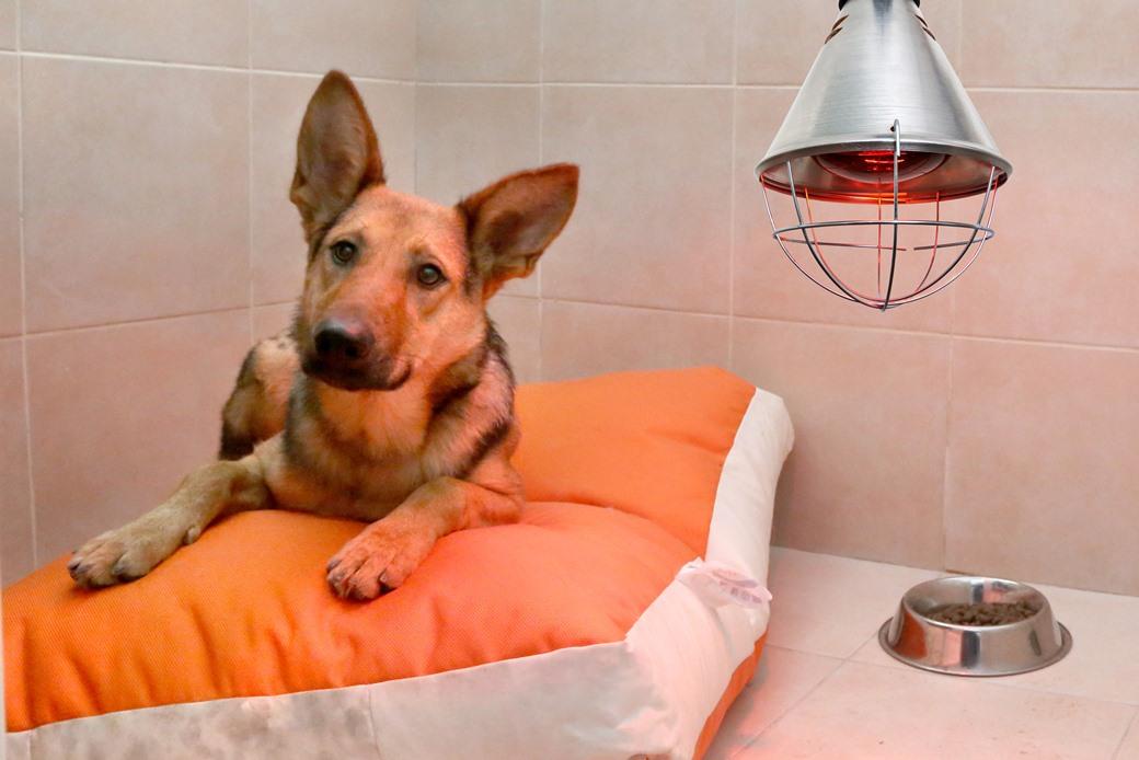 מנורות חימום לכלבים