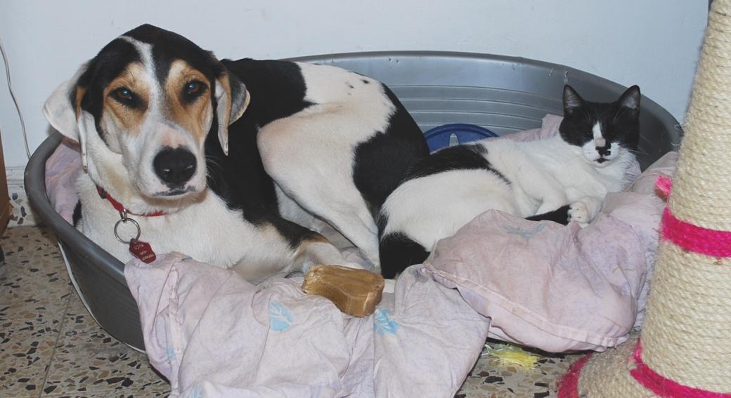 מיקה, כלבתה של נעמה, אומצה בגיל שנתיים, כאשר סילבי החתולה היתה בת חצי שנה