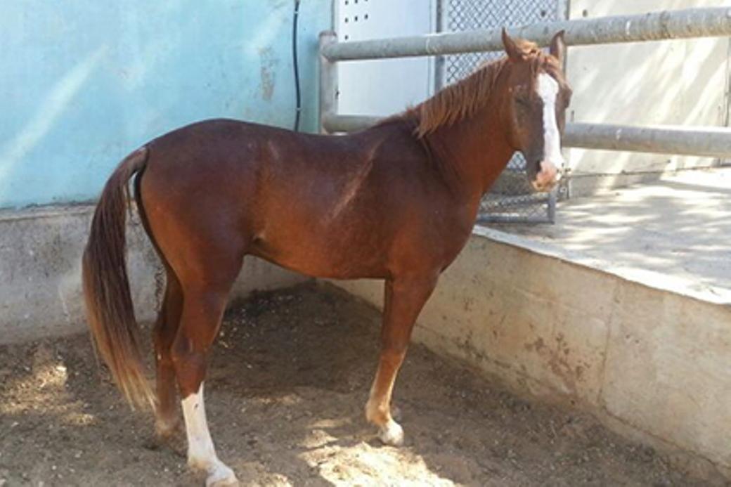 מוגלי כיום - סוס מקסים ובריא
