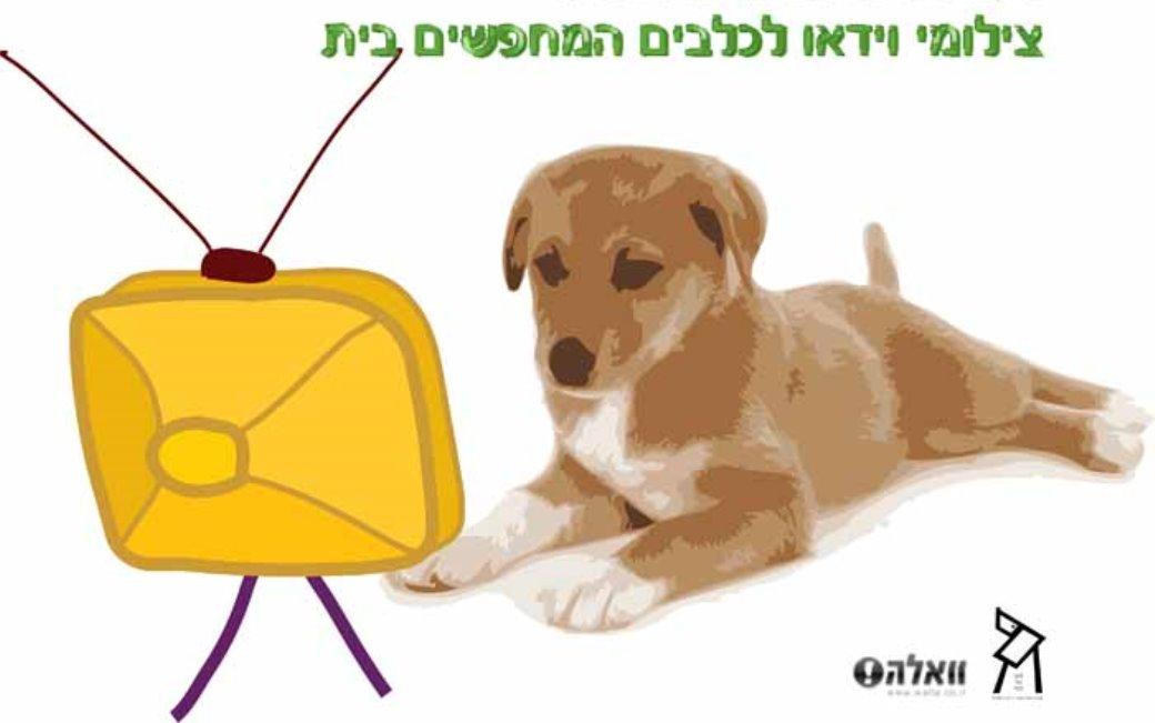 צילומי וידאו לכלבים המחפשים בית